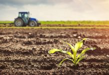 Kinh nghiệm khi mua đất nông nghiệp