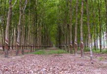 Mua đất trồng cây lâu năm chuyển đổi thành thổ cư